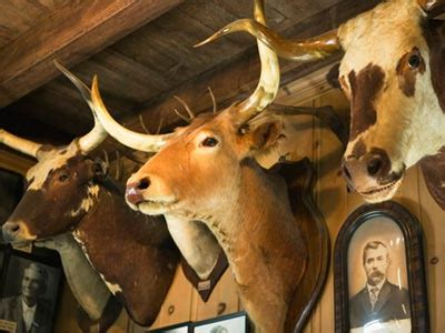 introduction  hunting trophies howstuffworks