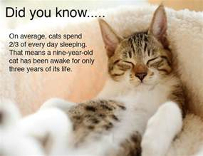 information about cats facts part 2 weneedfun