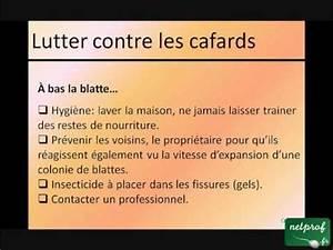 Comment Éliminer Les Cafards : lutter contre les cafards youtube ~ Melissatoandfro.com Idées de Décoration