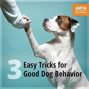 7 best dog training tips images on pinterest training With dog behavior training tips