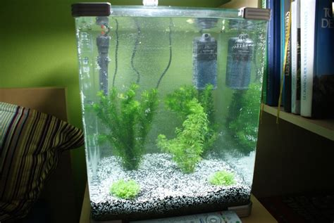 combien de poisson dans un aquarium aquarium eau douce 40l