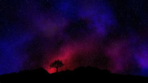 fondos de pantalla noche arbol estrellado cielo