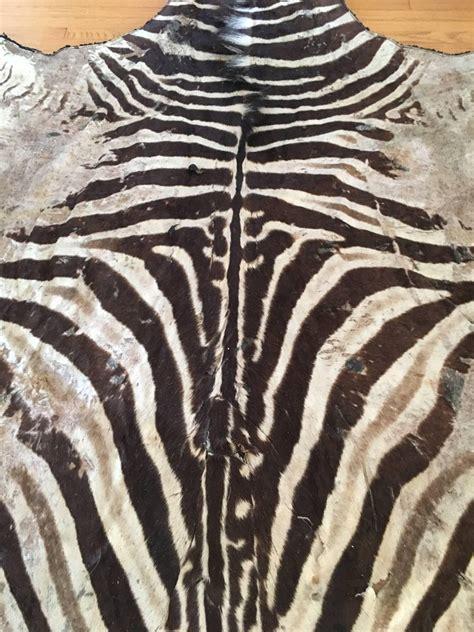 zebra skin rug authentic vintage felt backed zebra hide rug for at