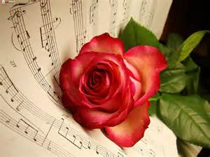 Rose Flower Images with Music