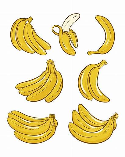 Banana Bananas Clipart Illustration Bunch Vector Single