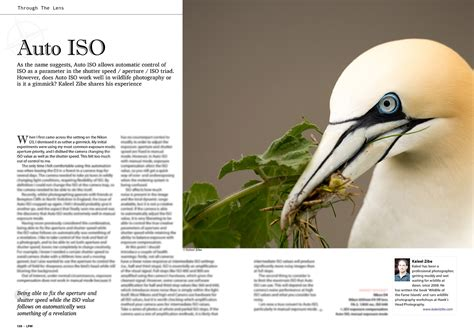 auto iso article  landscape wildlife photography