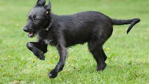 What Is Rickets Disease In Dogs  - Src