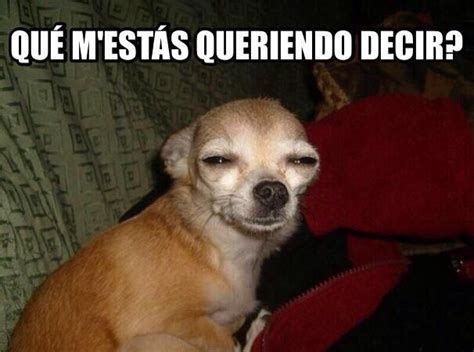Meme Chihuahua - las 25 mejores ideas sobre chihuahua meme en pinterest divertido disney lmfao y chihuahua