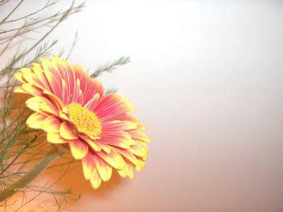 single  beautiful flowers