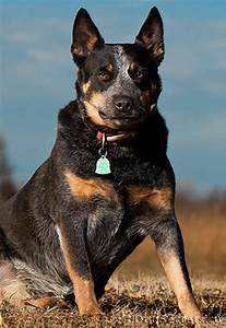 Лечение новокаином папиллом у собак