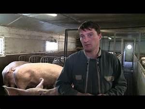 Depot De Bilan : les leveurs de porc menac s par le d p t de bilan youtube ~ Maxctalentgroup.com Avis de Voitures