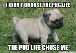 Pug Meme - pug life