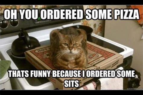 Funny Pizza Memes - 40 very funny cat meme pictures and images