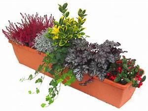 Pflanzen Für Balkonkästen Sonnig : balkonpflanzen set pflanzen versand harro 39 s pflanzenwelt kaufen bestellen online ~ Bigdaddyawards.com Haus und Dekorationen
