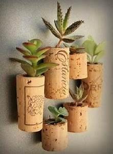 Entretien Plantes Grasses : entretien plante grasse d interieur florideeo ~ Melissatoandfro.com Idées de Décoration