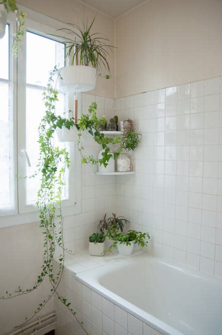 bathroom plant decor ideas  tips  choosing