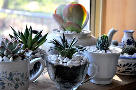 My Teacup Succulent Garden!  Epheriell Designs