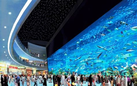 7 things to do in dubai the dubai mall aquarium dzzyn