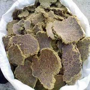 Cotton Seed Oil Cake, Bird Seeds, Poultry & Animal Food ...