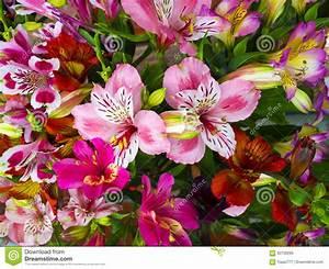 Bilder Von Blumenstrauß : blumenstrau von blumen alstroemeria blumenstrau von blumen alstroemeri stockbild bild von ~ Buech-reservation.com Haus und Dekorationen