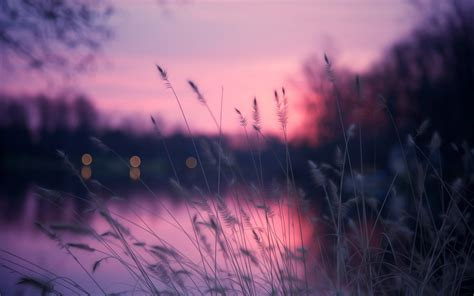 sunset nature hd wallpaper toanimationscom