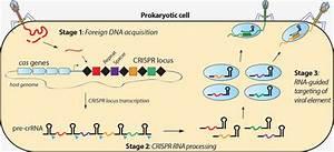 Crispr Systems
