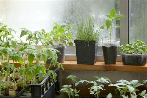 Windowsill Vegetable Garden by Windowsill Vegetable Gardening
