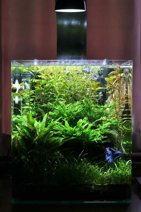 aquascaping planted tank attempt planted nano tank page 6 the planted