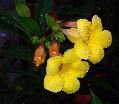 jenis tanaman hias bunga mempercantik taman
