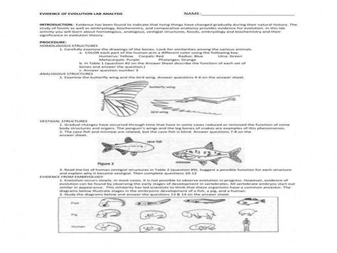 Natural Selection And Evidence Of Evolution Worksheet Breadandhearth