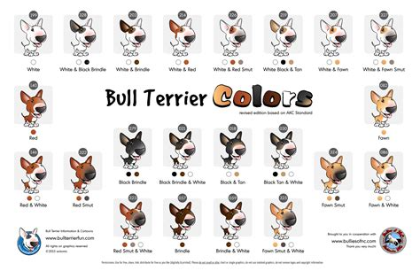 bull terrier colors bull terrier colors reference chart