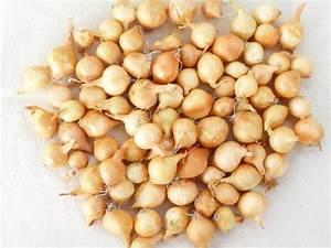 Repiquer Des Oignons : graines semis oignon jaune a repiquer rond cal 14 21 filet 1 kg ~ Voncanada.com Idées de Décoration