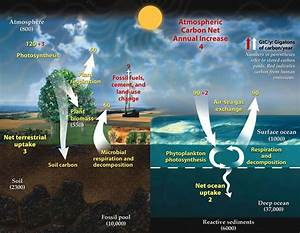 Carbon Cycle Diagram From The Doe With Numbers