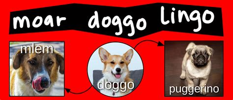 understanding doggo memes video diagram lucidchart blog