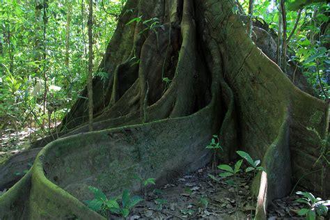 construction cuisine la forêt amazonienne recherche voyage