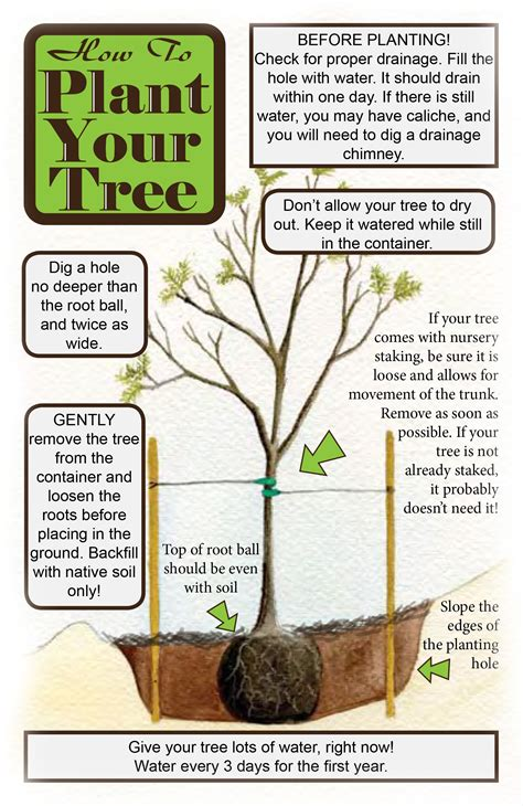 how can you plant a tree to a house planting maintenance tucson clean and beautiful inc