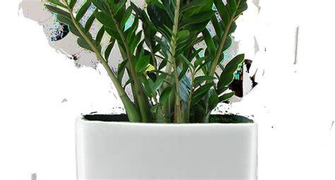 piante da interno con poca luce piante da appartamento poca luce piante appartamento