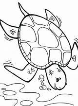Turtle Coloring Sea Pages Printable Cartoon Deep Drawing Printables Diving Deeper Turtles Diver Colouring Box Getcolorings Getdrawings Popular Template Colorings sketch template