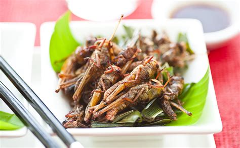 insecte cuisine 7 seriously farmed bugs modern farmer