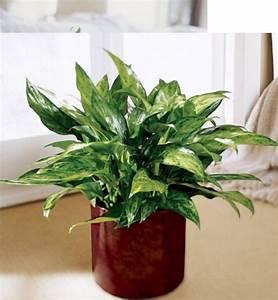 Grande Plante D Intérieur Facile D Entretien : plante verte d intrieur facile d entretien petite plante ~ Premium-room.com Idées de Décoration