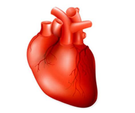 heart health sarah chung rn