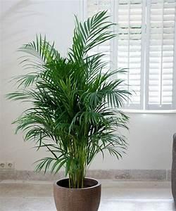 Plantes Pour Chambre : 5 plantes mettre dans la chambre pour passer une nuit agr able astuces pour tous les jours ~ Melissatoandfro.com Idées de Décoration