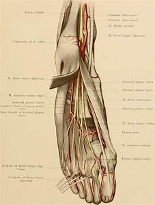 Nerve Blocks Of The Foot And Ankle  U2014 Down East Emergency