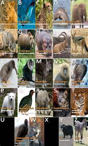 Endangered Animal Species Chart