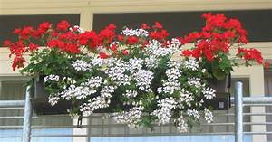 Blumen Für Schattigen Balkon : balkonkasten gerani blumen hecktor ~ Orissabook.com Haus und Dekorationen