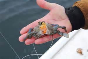 Blackfish Fishing Rigs