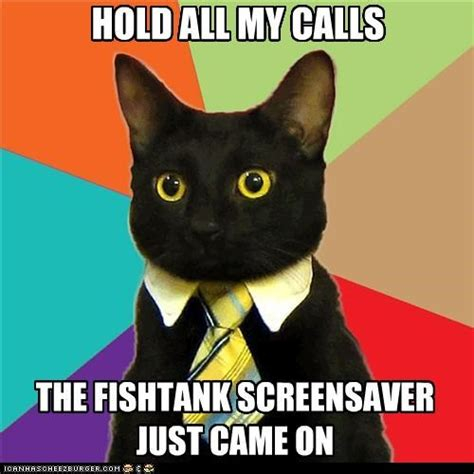 business cat  hilarious memes  business