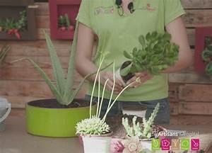 Comment Entretenir Un Cactus : comment r aliser un mini jardin de cactus et de plantes ~ Nature-et-papiers.com Idées de Décoration