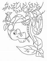 Snake Coloring Pages Boa Constrictor Ninjago Rattlesnake Printable Coral Diamondback Snakes Head Sheet Template Drawing Getcolorings Sketch Sea Popular Getdrawings sketch template