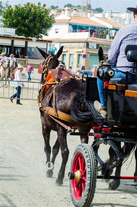 spain traditional almayate andalusian contest april horsecar fast